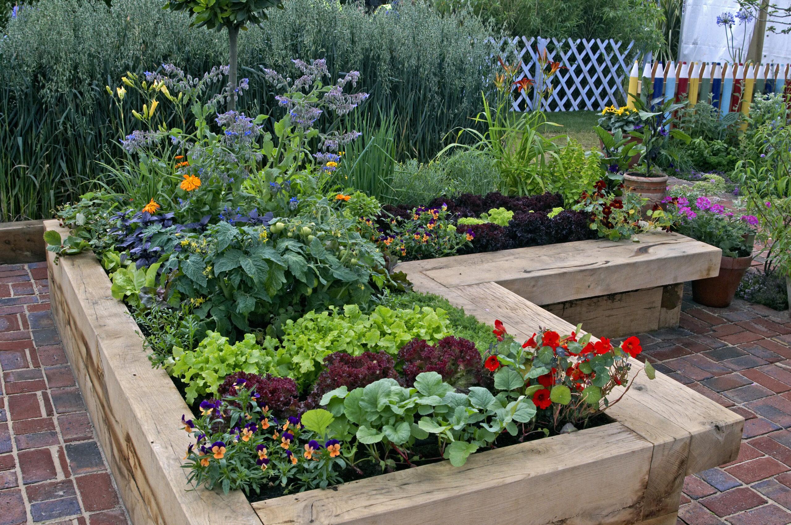 Ogródki warzywne