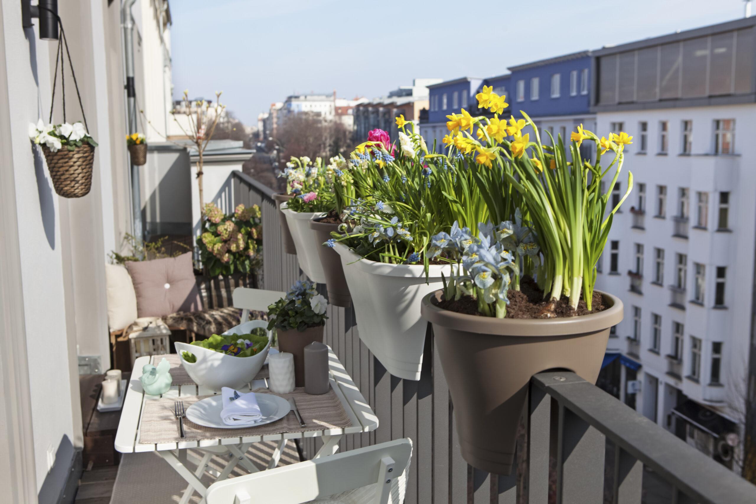 Zieleń na balkon i taras